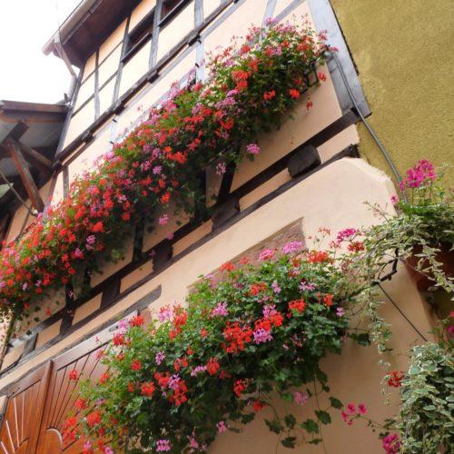 Gîte à colombage en Alsace